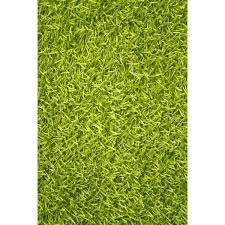 Green Area Rug Noble House Woven Lime Green Area Rug Reviews Wayfair