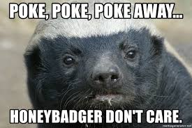 Honey Badger Meme - poke poke poke away honeybadger don t care staring honey