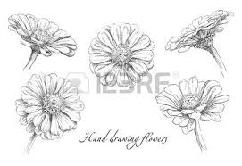 hand drawn vector illustration flowers set succulent rose