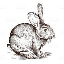 hand drawn sketch of rabbit stock vector art 507178504 istock