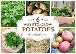 6 ways to grow potatoes grow potatoes plants and gardens