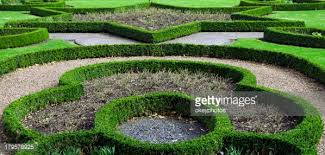 ornamental hedges stock photo getty images
