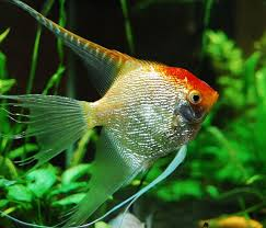319 best peces images on beautiful fish tropical fish