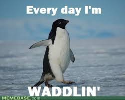 Funny Penguin Memes - deluxe 21 animals returning to their home planets wallpaper site