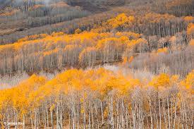 autumn utah u0027s colorado plateau southern utah fall color photos