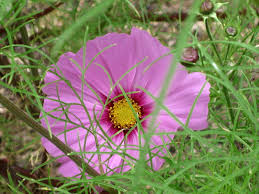 flower festivals august world love flowers monet gardens arafen