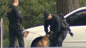 belgian malinois k9 attack attack dogs take aim at white house intruder video abc news