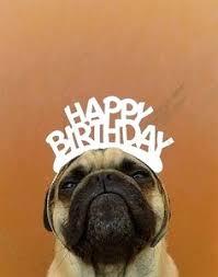 Happy Birthday Dog Meme - happy birthday dog quotes luxury the 25 best happy birthday dog meme
