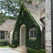 motor court facade of boston ivy and clipped boxwood on a project