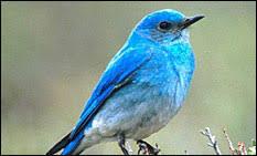 Birds In Your Backyard Montana Birds