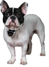 Gadgets For Pets Ultimate Gadgets For Pet Owners U2013 Thegadgetguy Co Nz