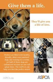 65 best peta images on pinterest animal rights animal cruelty