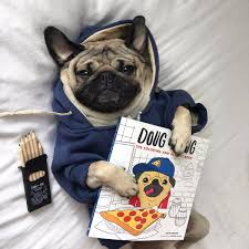 doug the pug on twitter