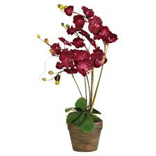 faux orchids potted faux phalaenopsis orchid oka
