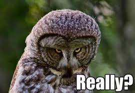 Funny Owl Meme - pin by kay becker on mild wild wonderful friends pinterest owl
