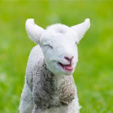 imagenes animales australia donate to animals australia