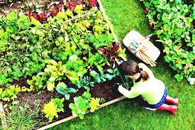 Gardening Zones Uk - raised bed vegetable gardening for beginners uk the garden design