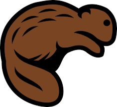 beaver animal mammal wildlife png image pictures picpng