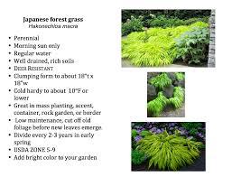 shade plants u2013 kurt u0027s garden