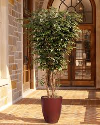 Fake Tree by Designer Quality 7 U0027 Deluxe Silk Ficus Tree At Petals