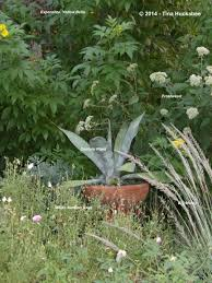 native plants of texas texas native plant week garden vignettes my gardener says u2026