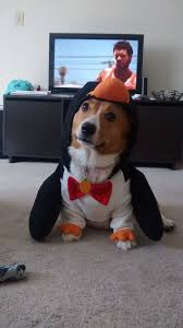 Funny Dog Costumes Halloween 25 Cute Dog Costumes Ideas Puppy Costume