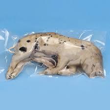 formalin preserved pigs plain carolina com
