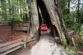 Chandelier Drive Through Tree Drive Thru Tree California Panoramio Photo Of Drive Thru Tree