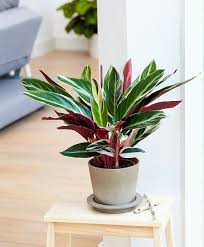 indoor plants that don t need sunlight 10 house plants that don t need sunlight eat loco