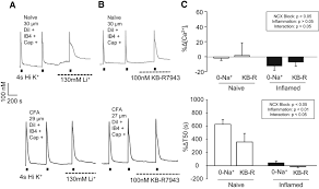 trafficking of na ca2 exchanger to the site of persistent
