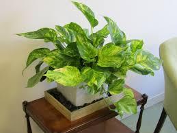 Best Flowers For Office Desk Office Design Best Indoor Plants Lucky Plants For Office Desk