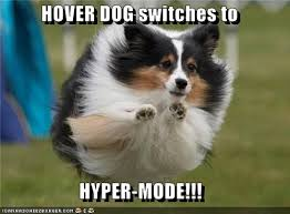 Hyper Dog Meme - hover dog i has a hotdog dog pictures funny pictures of dogs