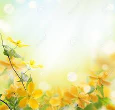 closeup of beautiful yellow flowers in the garden stock photo