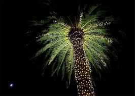 106 best christmas palmtree images on pinterest christmas lights