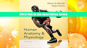 read online human anatomy physiology marieb human anatomy