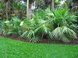 events palms are more than ornamentals