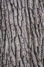 free photo texture bark wooden wood tree timber pattern max pixel