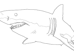 sharks coloring pages for shark drawing coloring page shimosoku biz