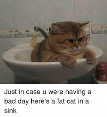 Fat Cat Meme - fat cat in a sink meme meme rewards