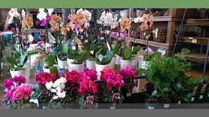 native plant nursery sunshine coast kawana plants u0027n palms garden nurseries 260 nicklin way warana