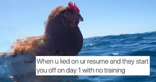 Chicken Memes - i can has cheezburger chicken funny animals online cheezburger
