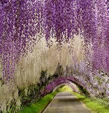 immagini di giardini fioriti il giardino fiorito ladri di bellezza