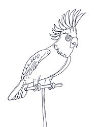 parrot coloring pages coloringpages1001