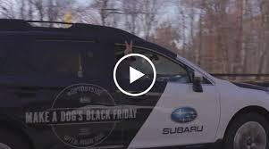 subaru black friday sale subaru encourages dog lovers everywhere to enjoy the great