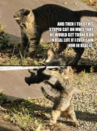 Stupid Cat Meme - and then i told this stupid cat on mw3 that he would get turned on