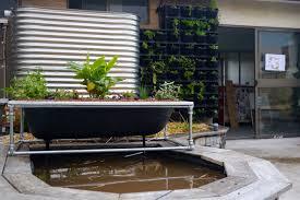 making a diy bathtub aquaponics system milkwood