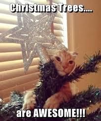 Cat Christmas Memes - lolcats christmas tree lol at funny cat memes funny cat
