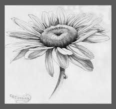 margarita drawing margarita flower drawing daisy drawing related keywords