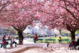 complete guide to blossom season in paris the glittering unknown