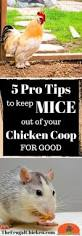 Backyard Chickens For Beginners by The 1031 Best Images About Backyard Chickens On Pinterest A
